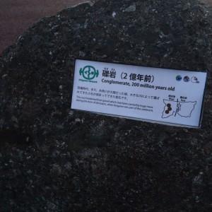 糸魚川 岩石10 礫岩