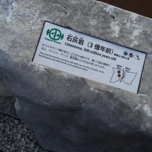糸魚川 岩石7 石灰岩