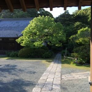 浄光明寺 ブラタモリ