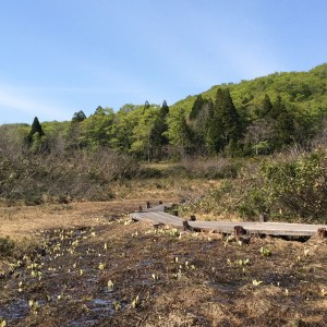 たんばら湿原 玉原