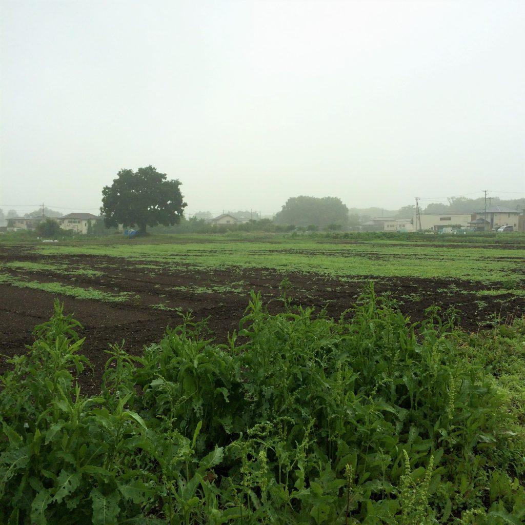 タビカ 農業体験