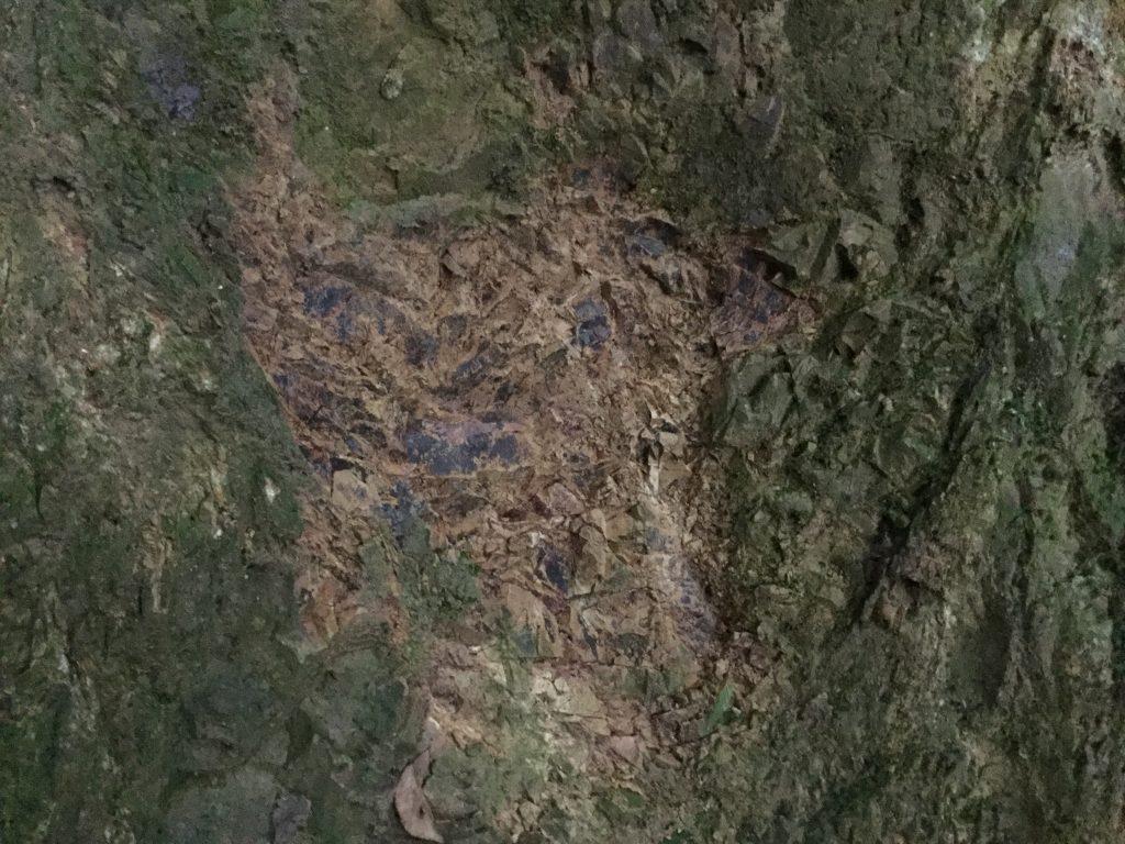 高尾山 地層