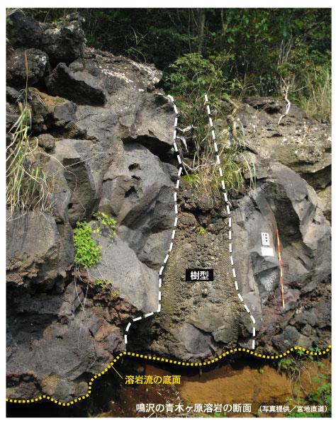 鳴沢溶岩樹形