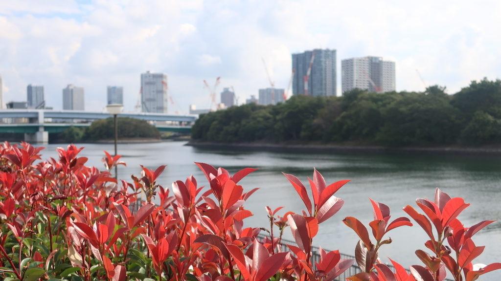 東京港旧防波堤