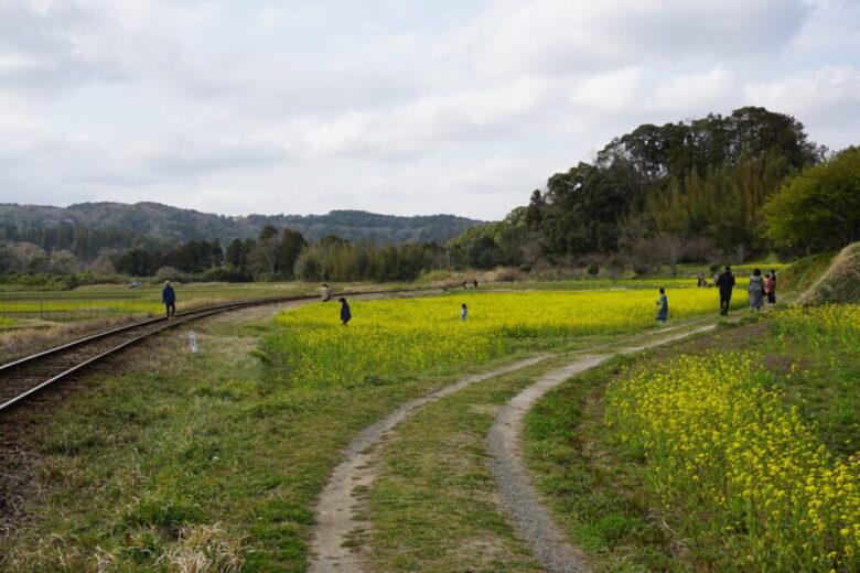小湊鉄道 菜の花撮影スポット