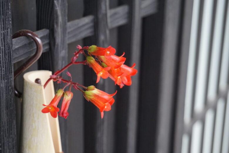 大町通り 花