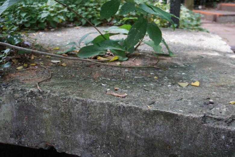 猿島、砲台、貝殻が混ざるコンクリート
