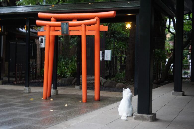 愛宕神社 老猫