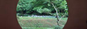 北鎌倉・明月院のあじさい 混雑・行列回避は閉門前を狙え